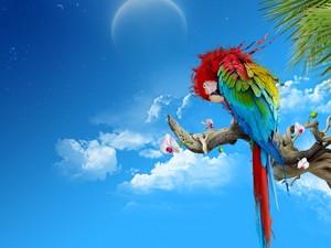 鸚鵡, オウム