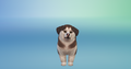 Puppies! - The Sims 4
