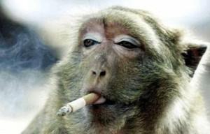random Monkey Business