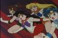 Sailor Scouts  - sailor-moon photo