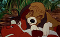 The Fox And The Hound Playing 1440x900 Wallpaper ToonsWallpapers - babygurl86 wallpaper