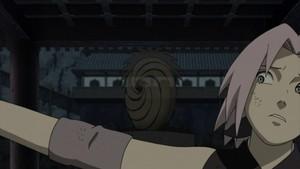 sakura and tobi