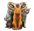 1 25 - warrior-cats photo