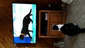 20180204 152200 Chloe watching the Kitty bowl 1