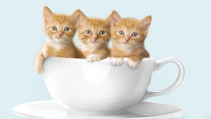 39026984 kittens پیپر وال