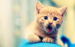 39081486 kittens پیپر وال