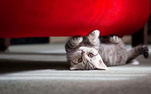 39100608 kittens پیپر وال