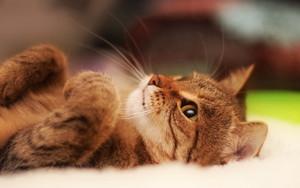 39154616 kittens پیپر وال