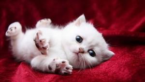 39311335 kittens پیپر وال
