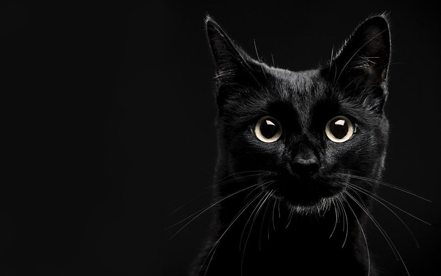 Chats Images Beautiful Black Cat Hd Fond D Ecran And Background
