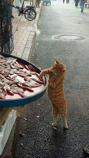Gatti Amore EAT pesce
