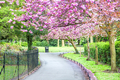 Cherry Tree In Full Bloom - beautiful-pictures photo