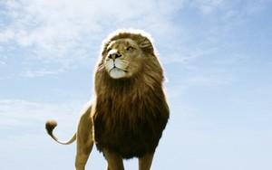 Narnia fondo de pantalla