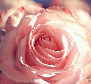 Pinkie Spring