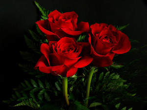 Red rosas For Valentine's dia