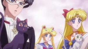 Tuxedo Mask Venus and Sailor moon