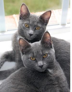 Two Beautiful Kitties