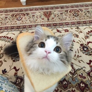 cat and bread!!!!