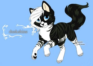 duskshine oc warrior cat 由 twianddashforever d5zxcv9