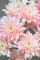 flowers - photography photo
