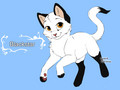 warrior cats character design templates blackstar by warriorcatscrazy d5re2t2 - warrior-cats photo