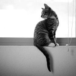 Cat Sitting On the Windowsill