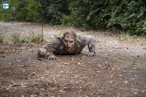 8x11 ~ Dead 또는 Alive 또는 ~ Walker