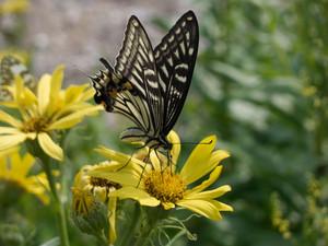 Beautiful бабочка