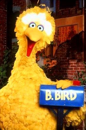 Big Bird (Sesame Street) - Big Bird Photo (41179665) - Fanpop