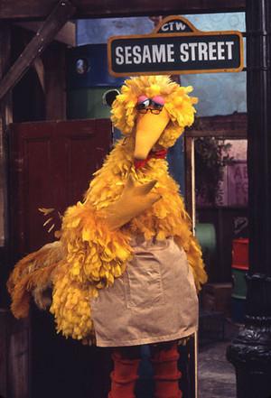 Big Bird as Mr. Hooper