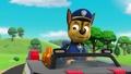 Chase  - paw-patrol photo