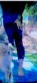 Debbie's Leg - the-debra-glenn-osmond-fan-page photo