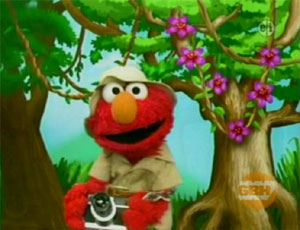Elmo as a Nature Photographer (Elmo's World)