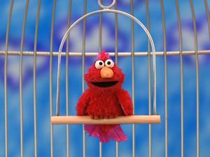 Elmo as a Pet Bird (Elmo's World)