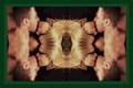 Olicity Yin-Yang Kiss Arrow 4x06 2250x1500 - emily-bett-rickards photo