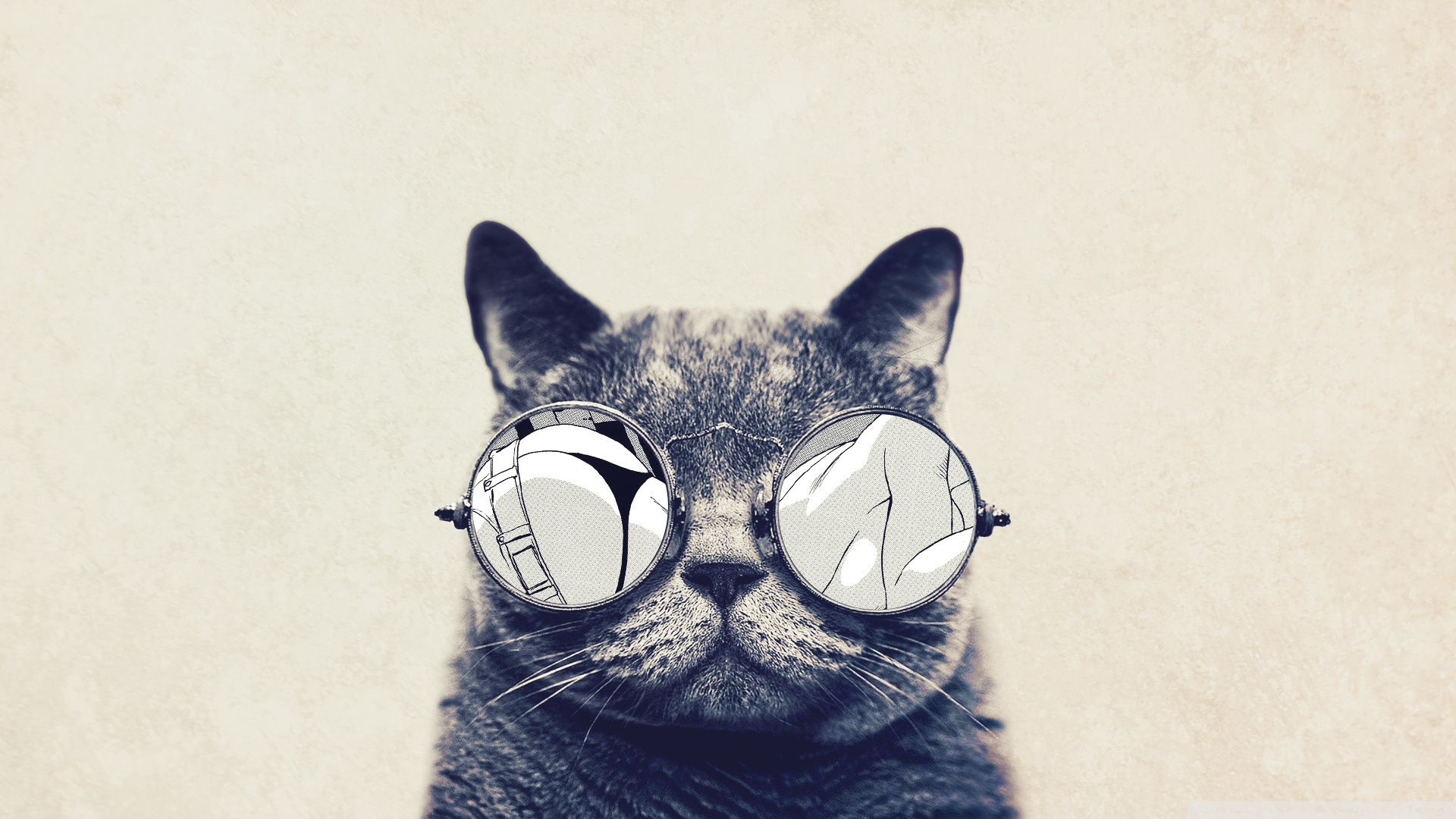 One Cool Kitty
