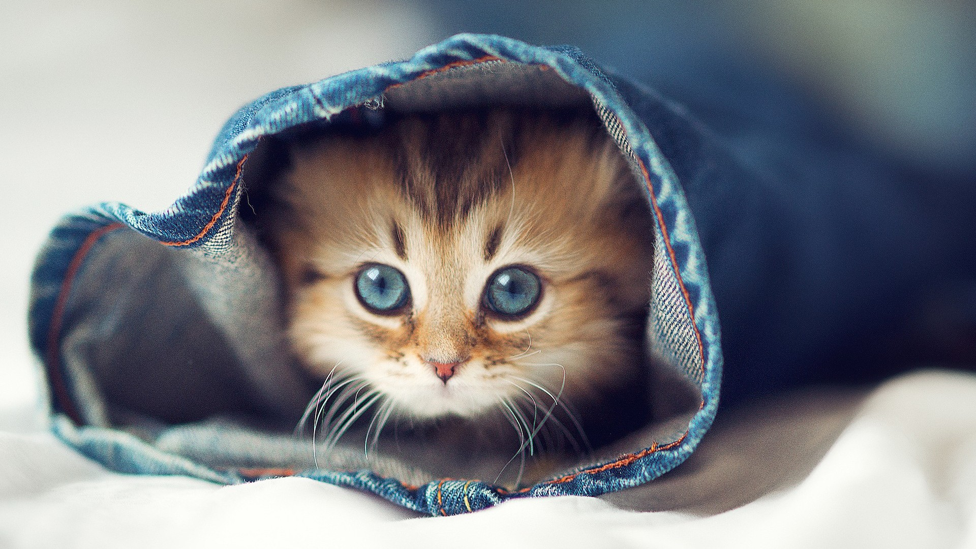 Katzen Bilder Playful Kitty Hd Hintergrund And Background Fotos