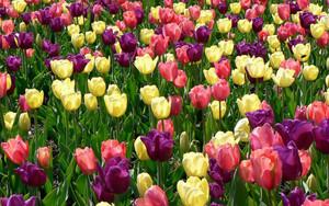 Spring Flowers🌷
