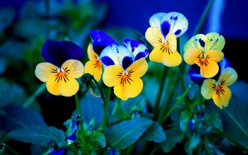 jlhfan624 achtergrond called Spring Flowers🌷