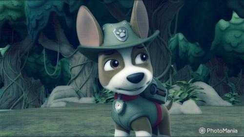 PAW Patrol karatasi la kupamba ukuta titled Tracker