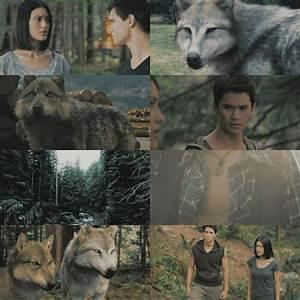 Twilight Mbwa mwitu loups