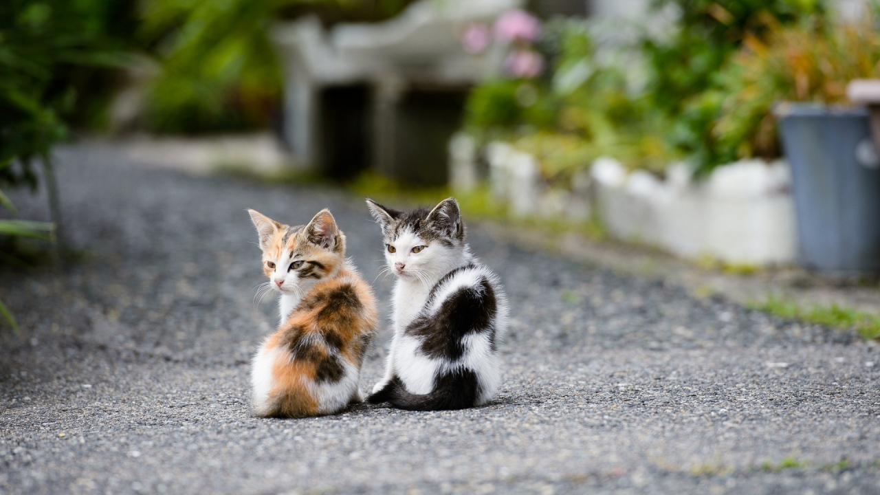Chats Images Two Cute Little Chatons Hd Fond D Ecran And Background