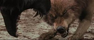 Mbwa mwitu loups