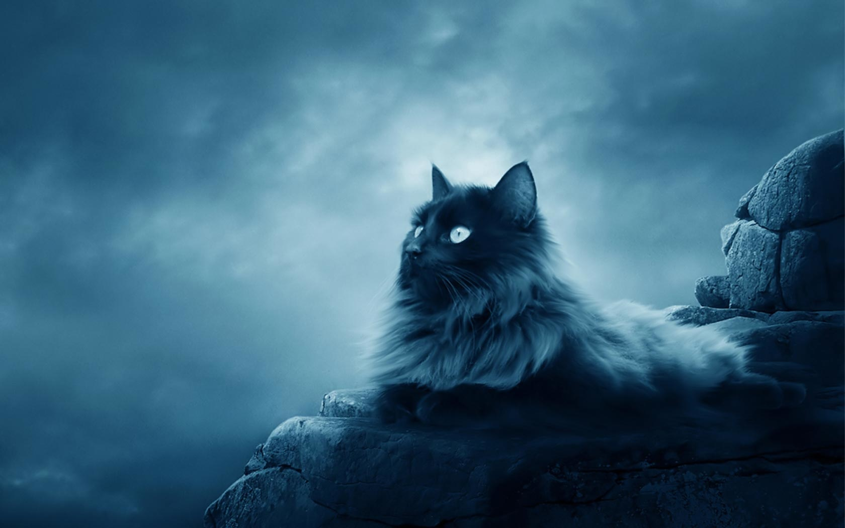 Beautiful Kitty Cats Wallpaper 41197398 Fanpop