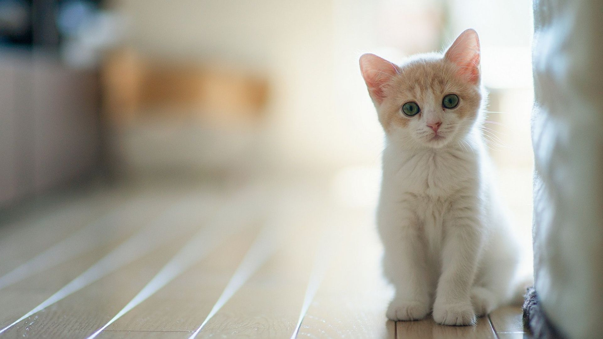 Cats Images Beautiful Kitty HD Wallpaper And Background Photos