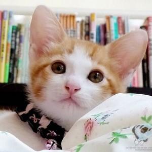 Ciel The Kitten