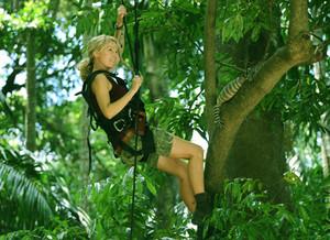 648652067 treeclimbing