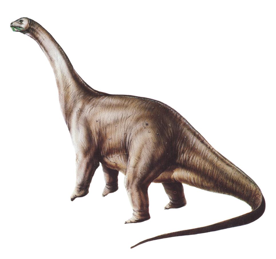 Apatosauro