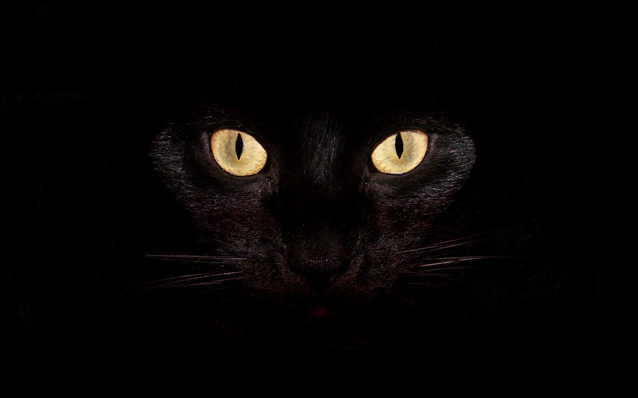 Katzen Bilder Beautiful Black Cat Hd Hintergrund And Background