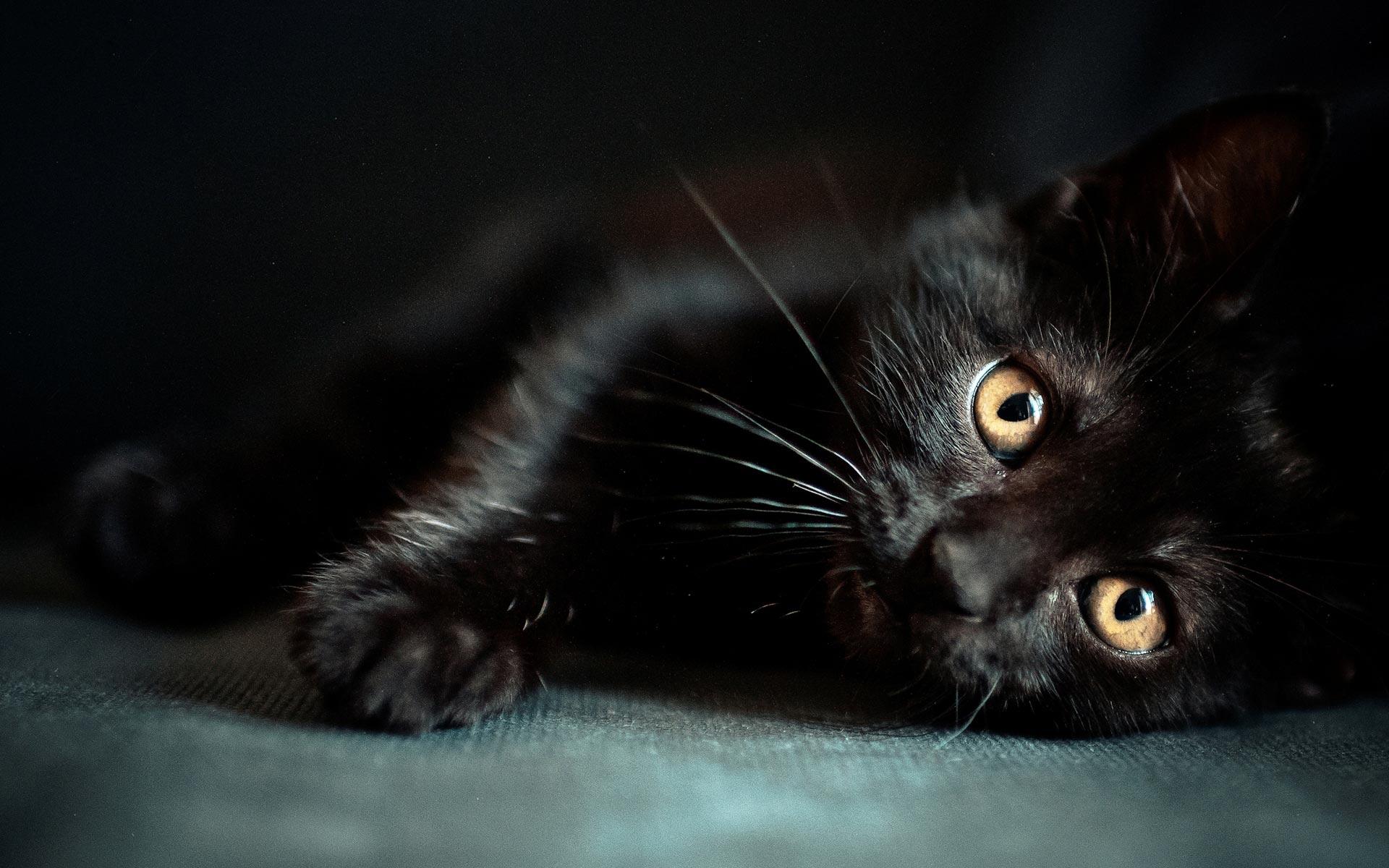 Beautiful Black Cat Cats Wallpaper 41243073 Fanpop Page 3